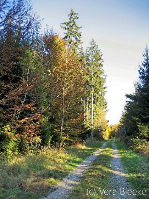 Herbstliche Impression von einem Spaziergang im Wald #8 - Veras Fotoblog